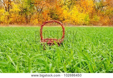 Basket, Autumn, Winter