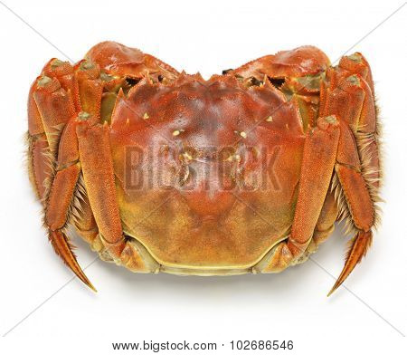 steamed chinese mitten crab, shanghai hairy crab isolated on white background