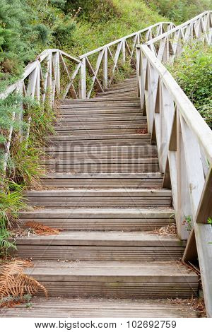Big wooden staircase surrounded by many vegetation.