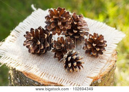 Pine Cones On Wooden Stump In Garden On Sunny Day