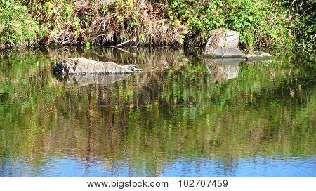 river as a mirror