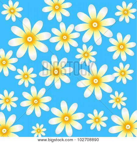 Camomile floral pattern