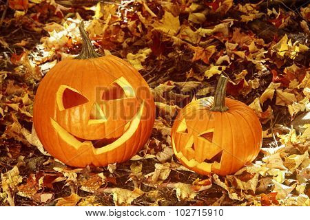Close up of halloween pumpkins on leaves in the woods