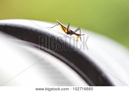 Small Insect