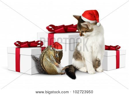 Comic Xmas Pet, Funny Tired Squirrel And Cat With Santa Hat