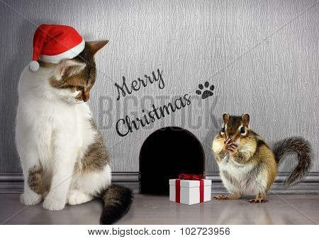 Christmas Congratulate Concept, Funny Cat With Santa Hat And Gift