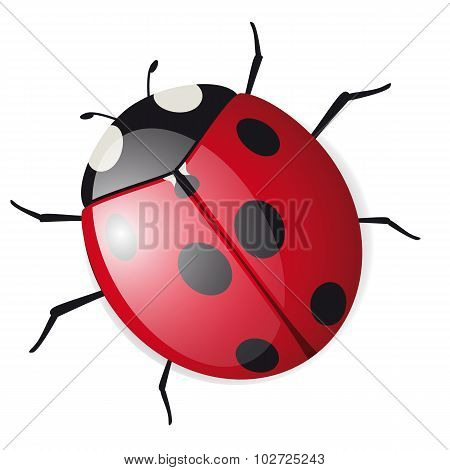Cute Vector Ladybird