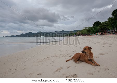 Beach of tropical island. The dog on sand, clouds.
