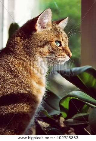 Close-up Portrait Of A Beautiful Domestic Cat