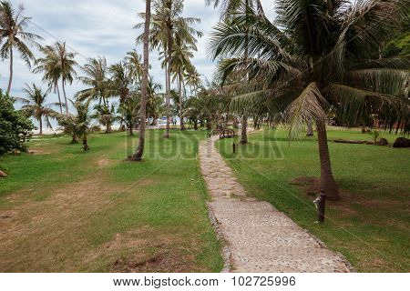 tropical garden and  the road to sea beach