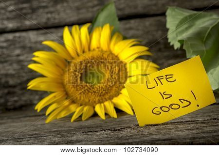 Yellow Card With A Life Is Good Message Leaning On A Beautiful Blooming Sunflower