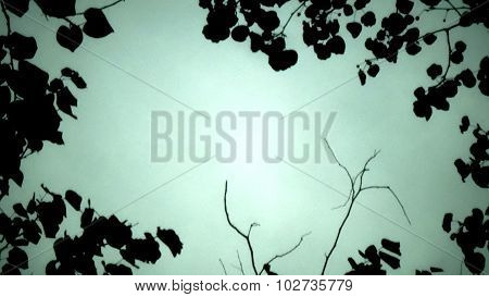 Branch and leaves silhouette