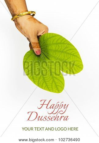 Piliostigma racemosum, important in indian festival dussehra, isolated on white background