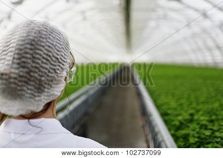 Biotechnology Woman Engineer With A Clipboard And Pen Examining A Plant Leaf For Disease