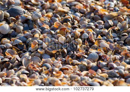 Shells background.
