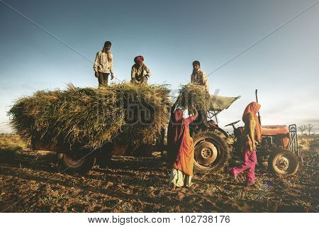 India Family Farming Harvesting Crops Harvesting Concept