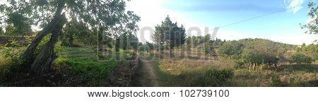 Ibiza rural landscape