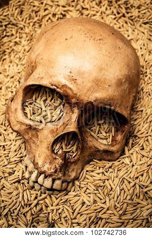 Skull And Rice Paddy, Still Life.