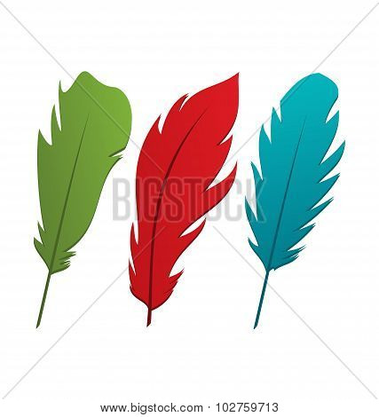 Set colorful feathers isolated on white background