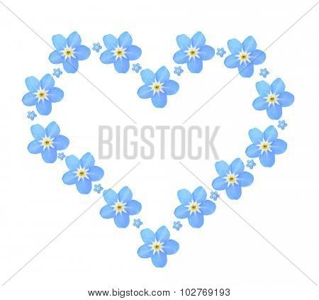 Heart of  Forget-me-not flowers, isolated on white