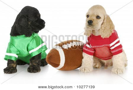 Sports Puppies