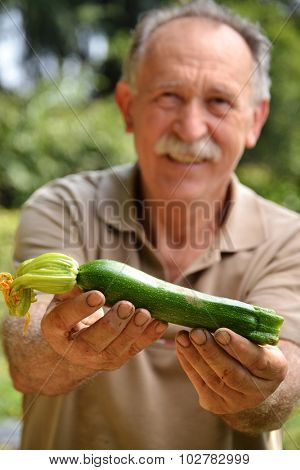 Cultivator holding fresh zucchini from crop.