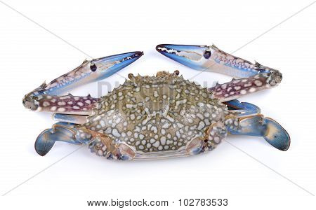 Blue Swimming Crabs On White Background