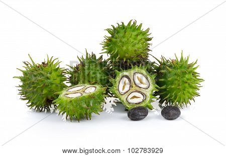 Castor Oil Plant On White Background