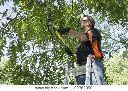 Trimming Limb  Off A Tree
