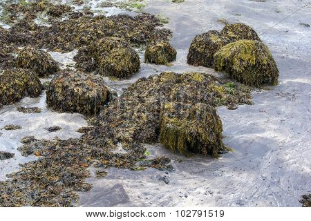 rock formation and sea kelp growth on the rocks
