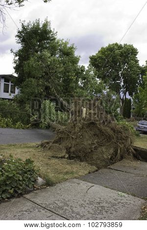 Violent summer windstorm uproots tree unto house