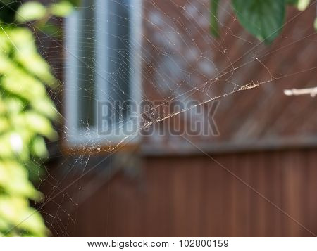 The cobweb on a garden background.