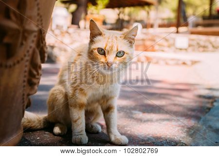 Red Stray Cat Street Kitten Outdoor