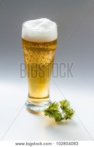 Light beer and hop isolated