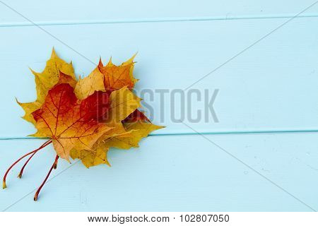yellow maple leave