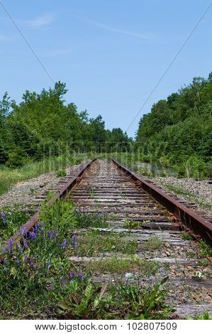 Old Railway Tracks In Cape Breton, Nova Scotia