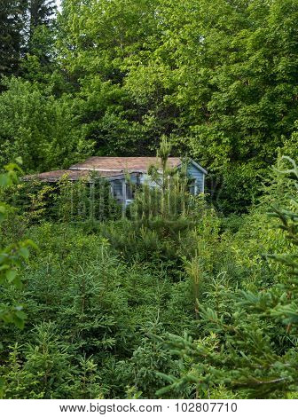 Overgrown House In Cape Breton