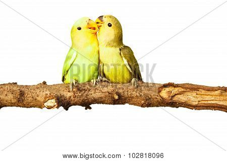 Birds Love On Isolated
