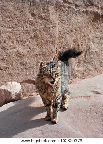 Portrait of a street cat