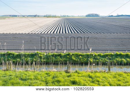 Landscape With Sleeky Formed Converging Potato Ridges
