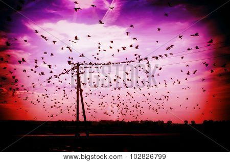 Flock of birds flying