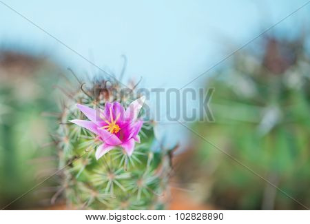 Cactus With Pink Flower On Green Background