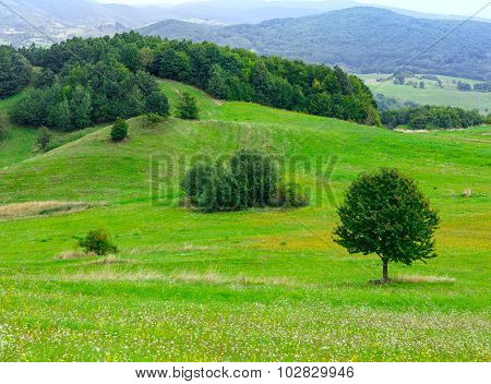 Sammer Hilly Meadow