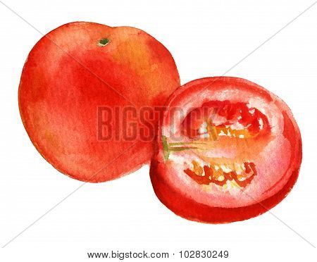 A Whole Tomato And A Half, Watercolour Drawing On White Background