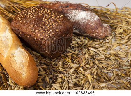 White, black and baguette homemade bread on the table with spikelets of rye and oats.
