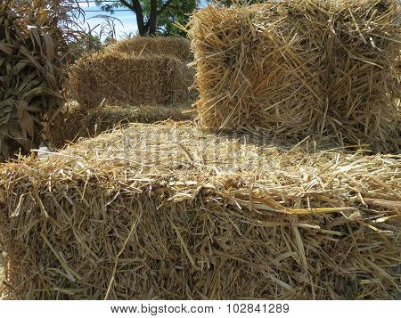 Close-up Undecorated Hay Bales for Autumn Celebrations