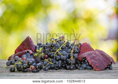 Grapes in wooden table outdoor in the garden