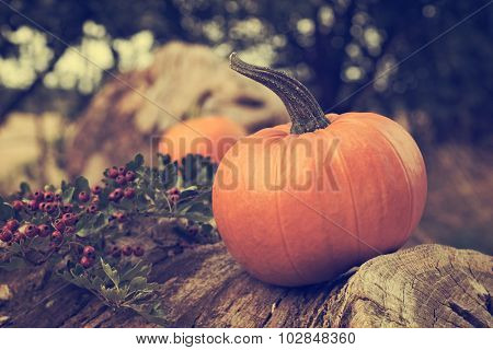 Autumn pumpkins on log with vintage tone