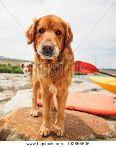 a dog enjoying the outdoors on a beautiful summer day with people kayaking in the river