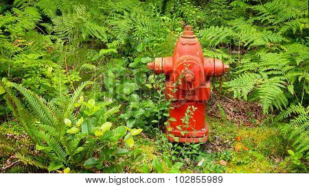 Red Fire Hydrant In Lush Forest Of Green Ferns
